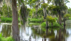 "Known as the ""Queen of the Bayous,"" the Teche was the original path of the Mississippi River several thousand years ago."